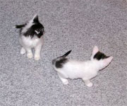 Kelly's Kittens