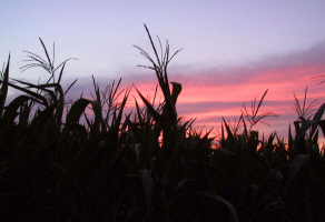 Amish corn and a colorful Maiden Creek sunset...